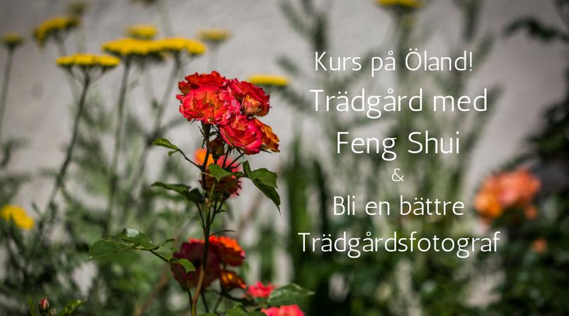 Feng Shui i Trädgården: Eldelementet