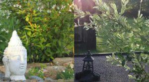 Kurspaket: Feng Shui i Trädgården
