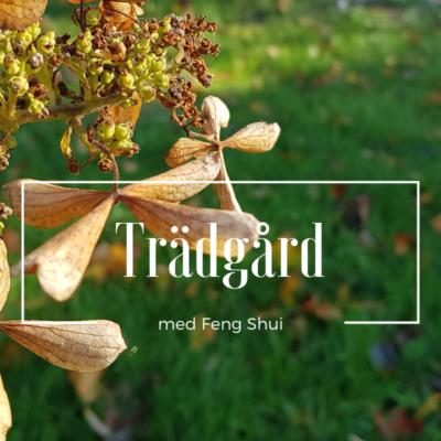 Höstkänsla i Rose´s Feng Shui Trädgård