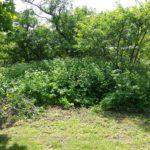 Trägårdsblogg