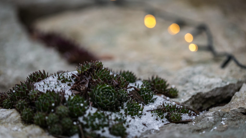 Januari o Rose´s Feng Shui trädgård