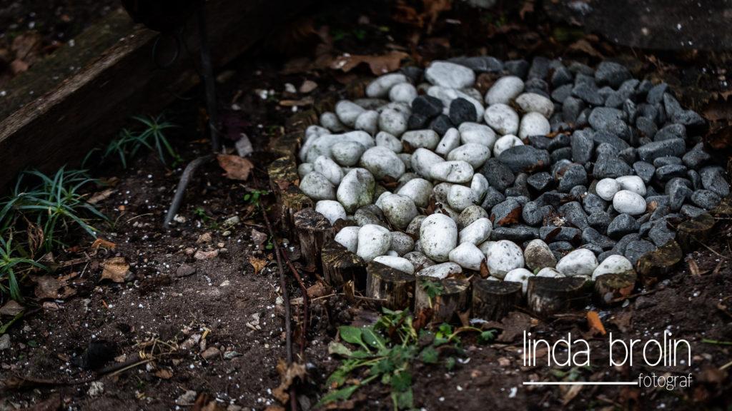 Rose´s vinterträdgård genom fotograf Linda Brolins lins