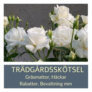 Priser Trädgårdsskötsel Kalmar